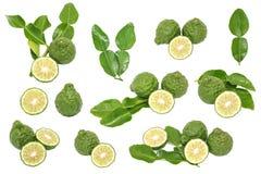 Bergamotkaffirlimefrukt lämnar örten den nya ingrediensen isolerade uppsättningen Royaltyfria Foton