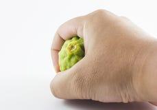 Bergamotowa owoc i ręka odizolowywający na białym tle Zdjęcie Royalty Free
