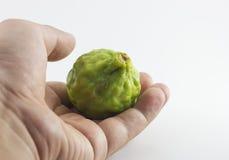 Bergamotowa owoc i ręka odizolowywający na białym tle Obraz Royalty Free