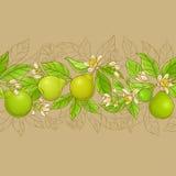 Bergamotowy wektorowy horyzontalny wzór ilustracji