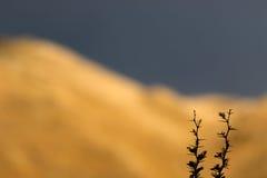 Bergbakgrund Royaltyfri Fotografi