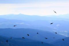 Bergbakgrund och ravens Arkivfoto