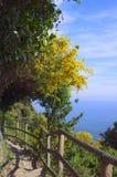 Bergbana i Cinque Terre Fotografering för Bildbyråer