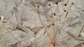 Bergbau Lizenzfreies Stockbild