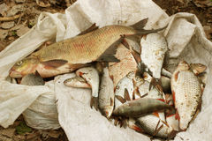 Bergbau des Fischers Lizenzfreie Stockfotos
