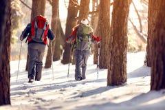Bergbeklimmers met rugzakken in hout Stock Afbeelding