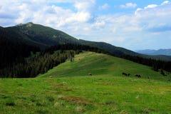 Bergbetesmark Fotografering för Bildbyråer