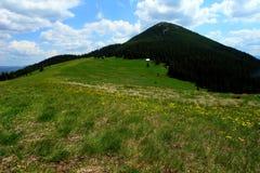 Bergbetesmark Arkivbild