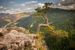 Bergblick, Bergpanorama, Gebirgsfluss, Reise zu den Bergen lizenzfreies stockfoto