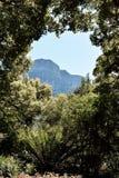 Bergblick durch die Bäume Stockfotos