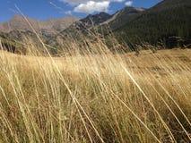 Bergblick durch Weizen Stockfotos