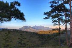 Bergblick entlang den Kiefernwäldern Stockbilder