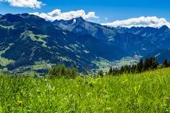 Bergblick mit grüner Wiese in hoher Straße Vordergrund Zillertal, Österreich, Tirol Stockbild