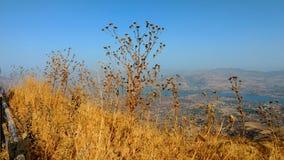 Bergblick zur Tageszeit stockbild
