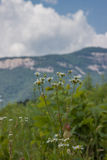 Bergbloemen stock foto