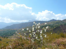 Bergbloemen Stock Fotografie