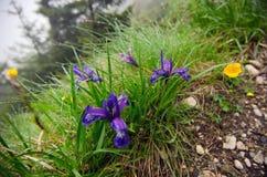 Bergbloemen Stock Afbeelding