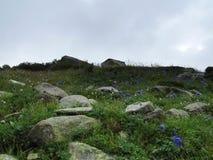 Bergblomma efter regnet fotografering för bildbyråer