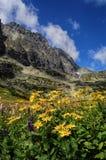 Bergblommor Arkivbilder