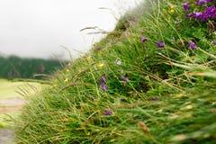 Bergblommor och nära övre för gräs Arkivfoto