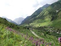 Bergblommor semesterort Issyk-Ata i Kirgizistan Arkivfoto