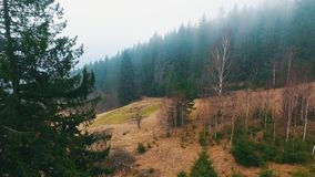 Bergbos onder de mist stock video
