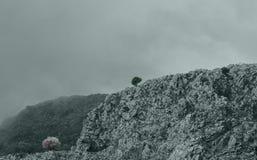 Bergbovenkant in Korfu Griekenland met dramatische mist en een eenzame boom stock fotografie