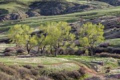 Bergdal i Colorado Royaltyfri Bild