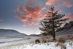 Bergdal under soluppgång Arkivbilder