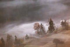 Bergdorf in den Wolken des Nebels und des Rauches Einsam eine Kiefer auf einem Gebiet und ein gelbes Gras stockbild