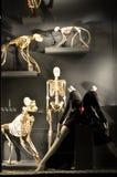 Bergdorf Goodman in NYC Stock Image
