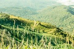 Berge, Bäume, blauer Himmel, heller Blick bequem lizenzfreie stockfotos