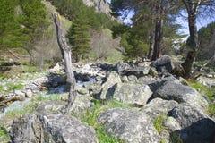 Berge bedeckt mit Wald Stockfotografie
