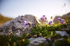 Berge der Kaukasus-Strecke Arkhyz, Sofia See, kletternder mou lizenzfreies stockfoto