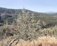 Berge der Sierra De Frankreich Stockfotos