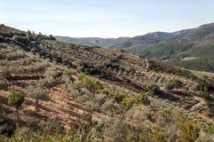Berge der Sierra De Frankreich Stockfoto