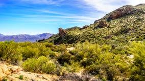 Berge in der Wüste gestalten mit seinen vielen Saguarokakteen und -sträuchen entlang Bartlett Dam Road landschaftlich lizenzfreie stockfotos