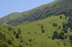 Berge des größeren Kaukasus in natürlicher Reserve Ilisu, nordwestliches Aserbaidschan lizenzfreies stockfoto