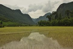 Berge, die in den Reispaddys in Muang Ngoi, Laos sich reflektieren Stockfotos