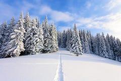 Berge an einem Morgen und an einem Schnee bedeckten grüne Weihnachtsbäume Erstaunlicher Winterhintergrund Schöner Weihnachtsfeier Lizenzfreies Stockfoto