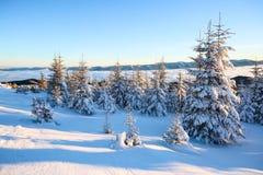 Berge an einem nebeligen Morgen und schneebedeckten grünen an Weihnachtsbäumen Erstaunlicher Winterhintergrund Schöner Weihnachts Lizenzfreie Stockfotos
