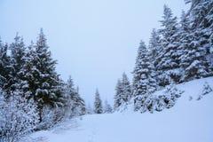 Berge an einem nebeligen Morgen und schneebedeckten grünen an Weihnachtsbäumen Schöner Winterhintergrund Lizenzfreie Stockfotos