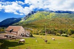 Berge gestalten landschaftlich und lassen Kühe auf dem Bauernhof weiden Stockfotografie
