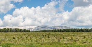 Berge im Hintergrund des Waldes über der Wiese hinaus Lizenzfreie Stockfotos