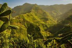 Berge in ländlichem Park Anaga, Teneriffa lizenzfreie stockfotos