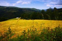 Berge mit Ackerland Asturia Stockfoto