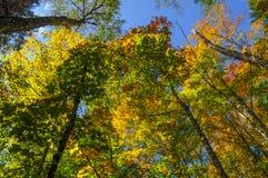 Berge Mixe-Hartholz-Forest In Autumn In Thes Adirondack von Ne Stockbild