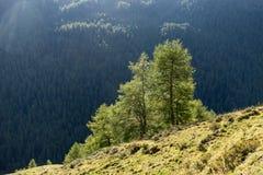Berge, Spitzen und Bäume gestalten, natürliche Umwelt landschaftlich Hohe alpine Straße Timmelsjoch Stockfotos