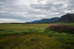 Berge und üppige Wiesen nah an Kanal-Hafen-Zusatzbasken in Neufundland lizenzfreies stockbild