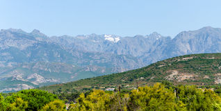 Berge und Bäume in Korsika Stockfoto